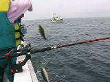 トリプルで釣りあ上げた.jpg