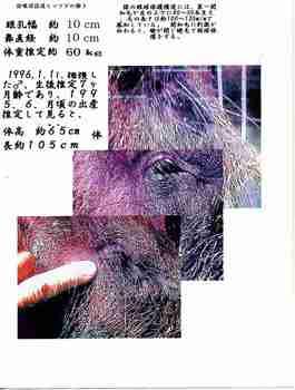 睫毛三題.jpg